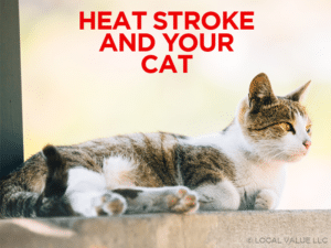 Heat Stroke and Your Cat