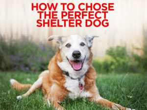 How To Choose The Perfect Shelter Dog