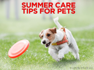 Summer Care Tips For Pets