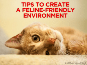 Tips to Create a Feline-Friendly Environment